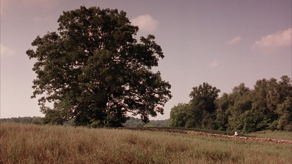 the_shawshank_redemption_tree